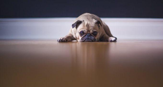Wo sind die Quartalsberichte zum Musikzentrum? Hat die etwa der Hund gefressen?