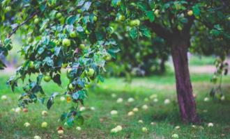 Bochumer sollen wieder Bäumchen für Neugeborene im Zauberwald pflanzen können.