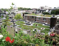 Finanzielle Anreize für Dachbegrünung in Bochum