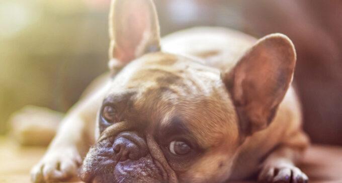 Hundesteuer zugunsten einer niedrigen zweckgebundenen Gebühr abschaffen.