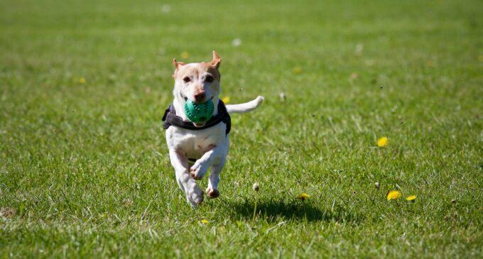 Eingezäunte Freilauffläche für Hunde im Wattenscheider Stadtgarten
